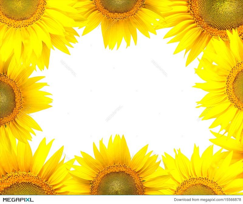 Sunflower Frame Stock Photo 15566878 - Megapixl