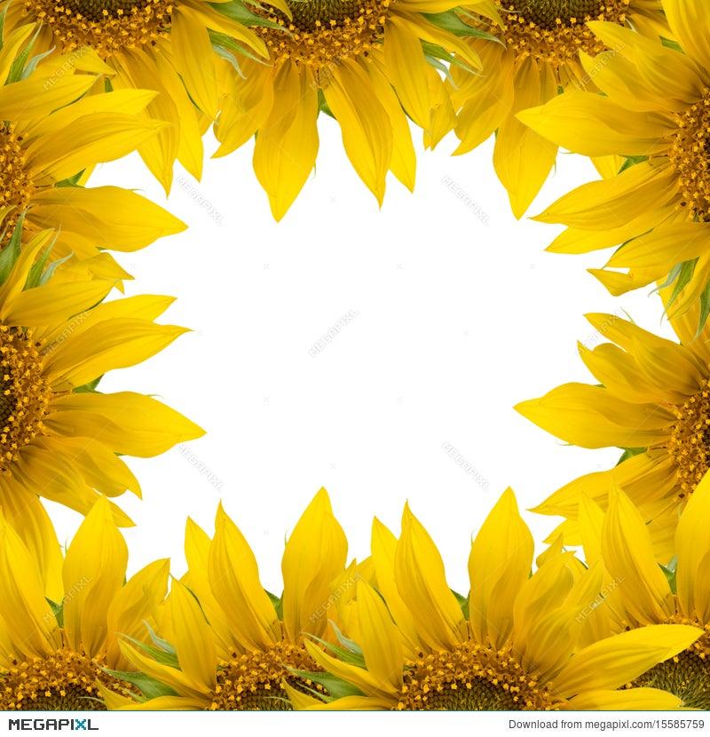 Sunflower Frame Stock Photo 15585759 - Megapixl