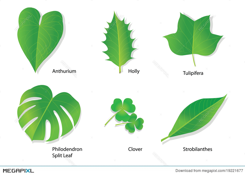 Tropical Leaves With Botanical Names Illustration 19221677 Megapixl Here you can explore hq tropical leaves transparent illustrations, icons and clipart with filter setting like size, type, color etc. tropical leaves with botanical names