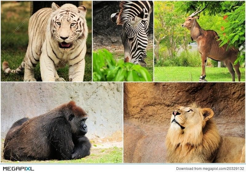 Wild Animals Collage Stock Photo 20329132