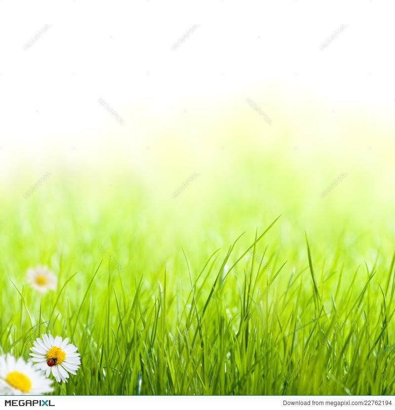 Green Grass Spring Garden Background Stock Photo 22762194 - Megapixl