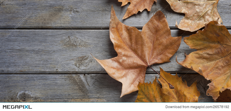 Leaf Autumn Fall Wood Background
