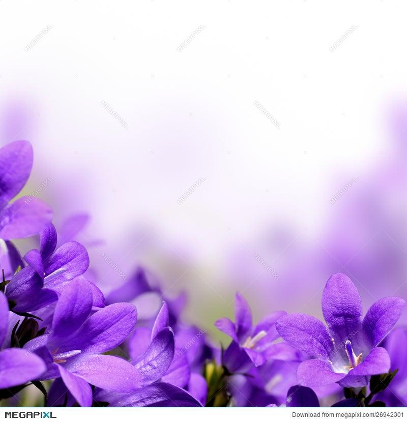 Campanula spring flowers border stock photo 26942301 megapixl campanula spring flowers border mightylinksfo