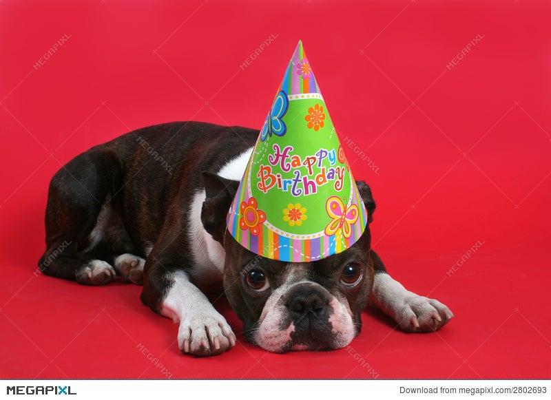 Sad Birthday Stock Photo 2802693 Megapixl