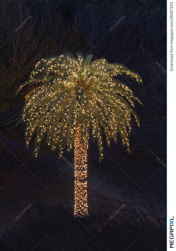 solitary palm tree decorated with christmas lights