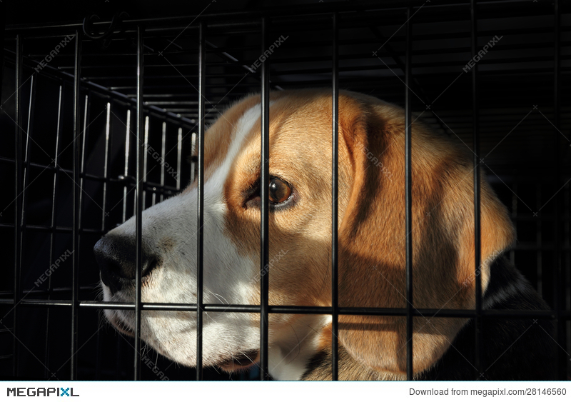 Animal Testing - Scared Dog In Cage Stock Photo 28146560