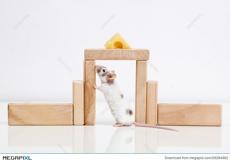White Mouse And House Stock Photo 29284962
