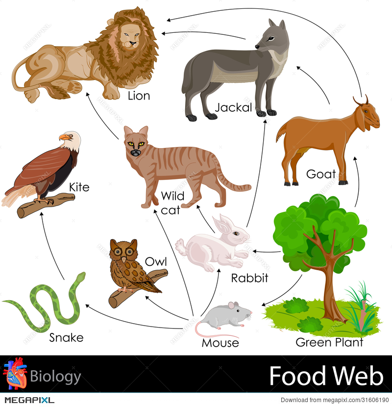 Wildlife Food Chain Diagram Trusted Wiring Diagram