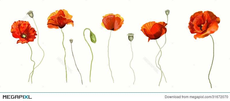 Poppy flower illustration 31672070 megapixl poppy flower mightylinksfo