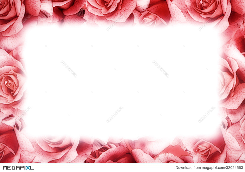 Pink Rose Frame Stock Photo 32034583 - Megapixl