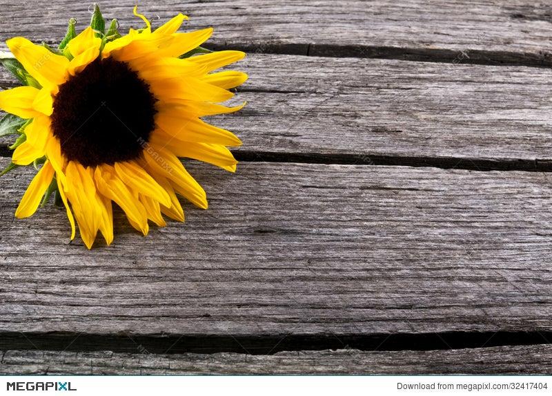 Beautiful Sunflower Yellow Flower On Wood