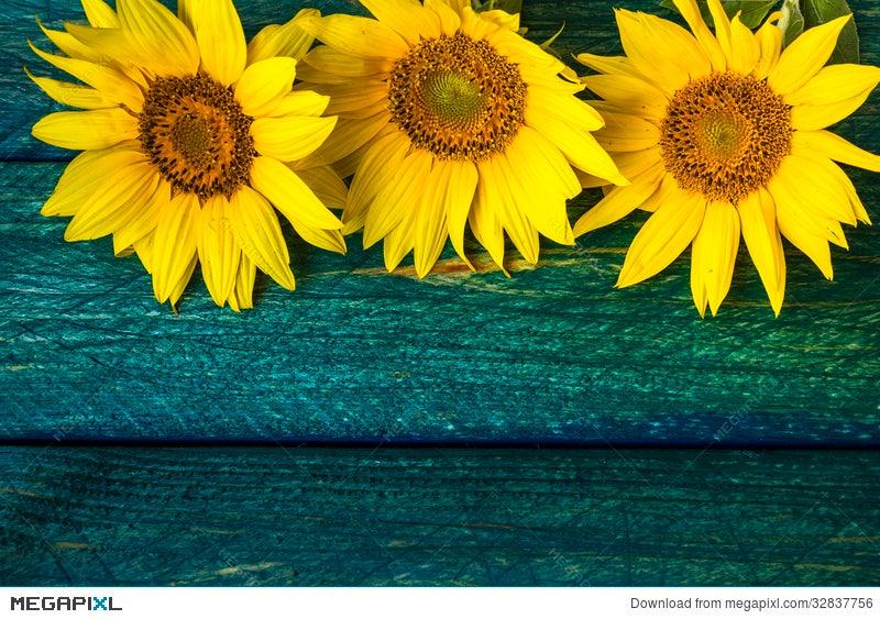 Art Background Summer Floral Flower Vintage Sunflower