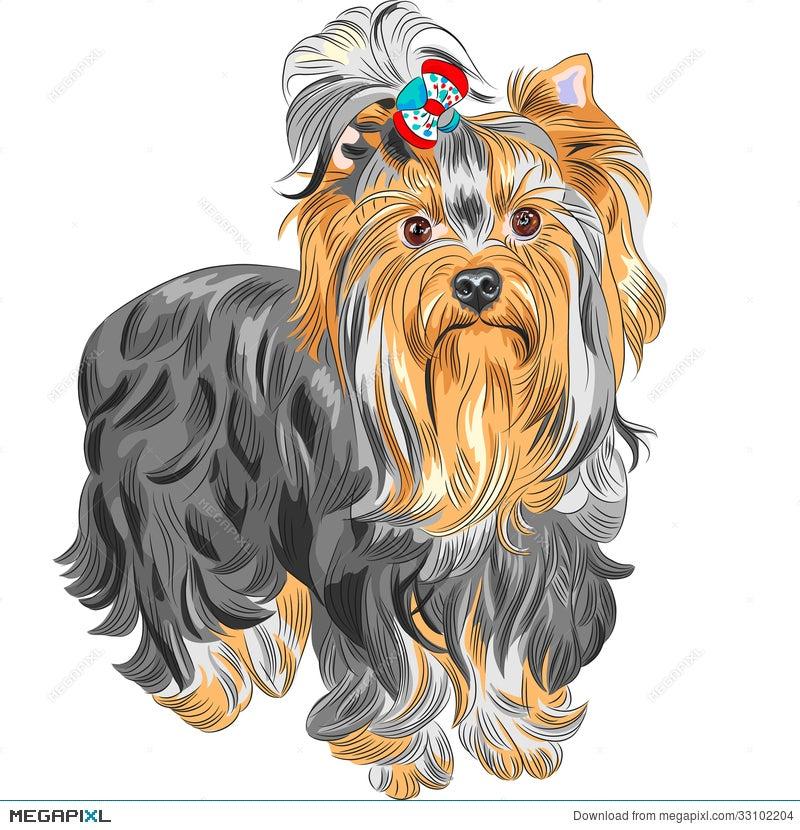 Vector Cute Pedigreed Dog Yorkshire Terrier Illustration 33102204