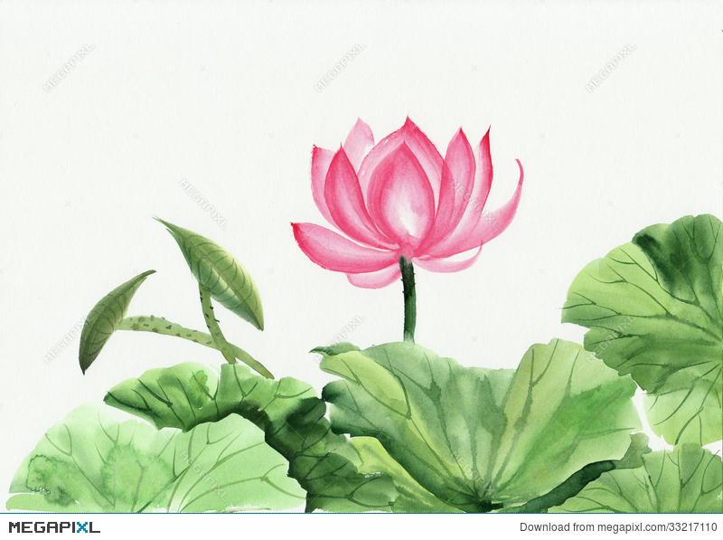Watercolor Painting Of Pink Lotus Flower Illustration 33217110