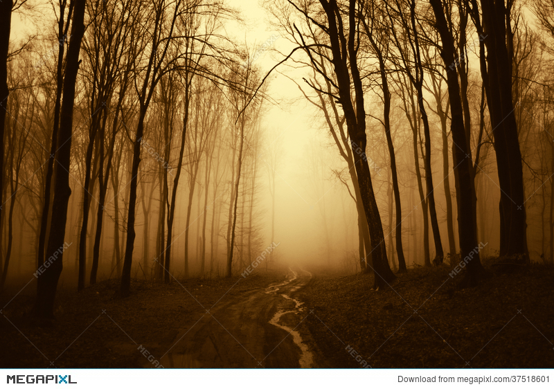 Road Trough A Dark Scary Surreal Forest With Fog Stock Photo