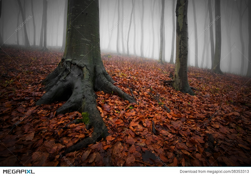 Dark Forest With Fog Red Leaves And Trees With Big Roots On