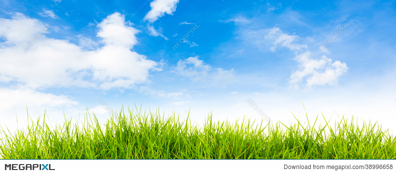 Spring Nature Background With Grass And Blue Sky Stock Photo