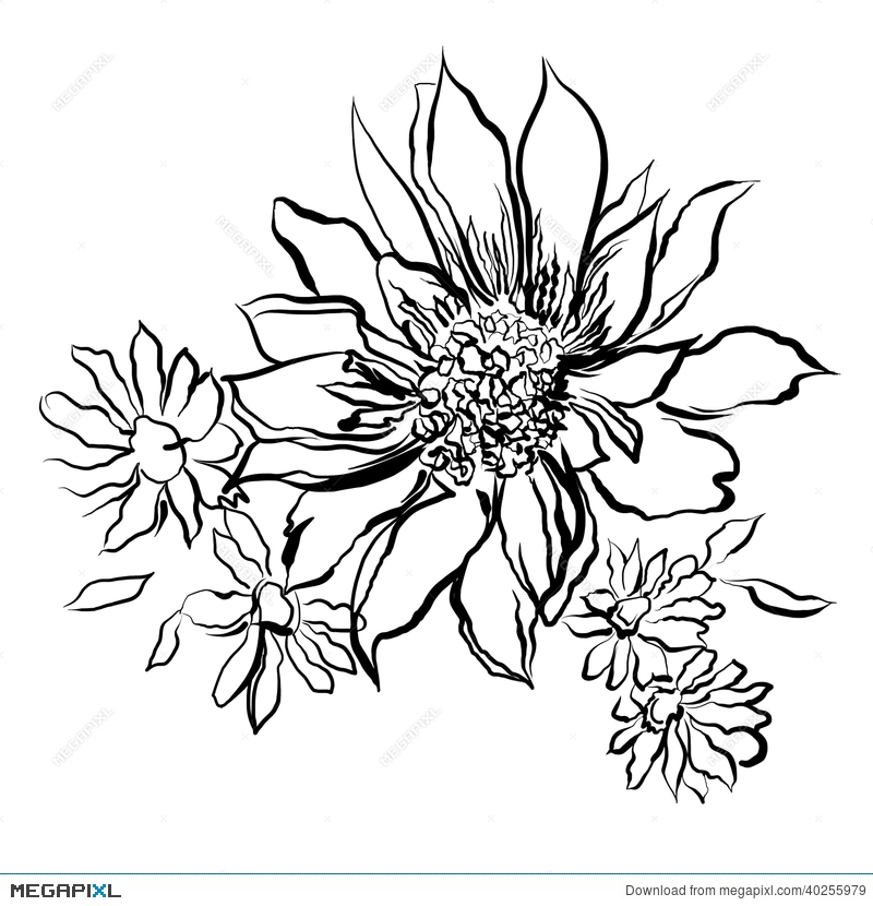 Flowers painted black outline on the white background illustration flowers painted black outline on the white background mightylinksfo