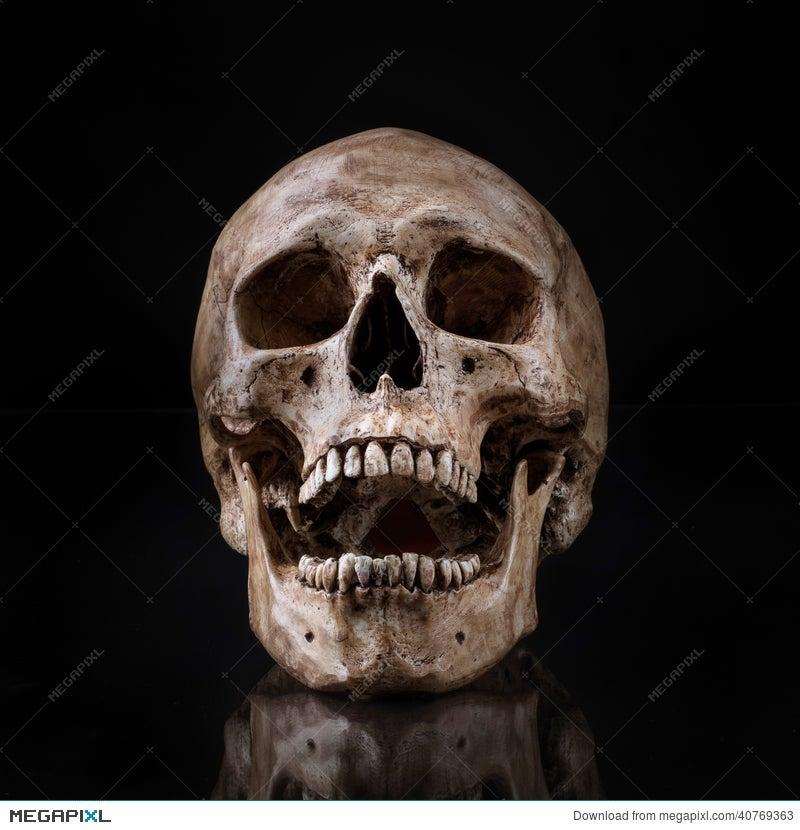 Human Skull Front View | www.pixshark.com - Images ...