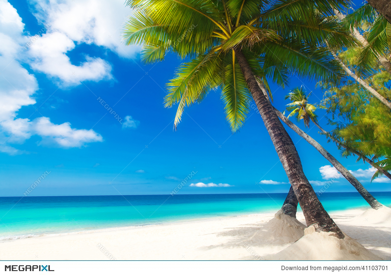 Dream Scene Beautiful Palm Tree Over White Sand Beach Summer N