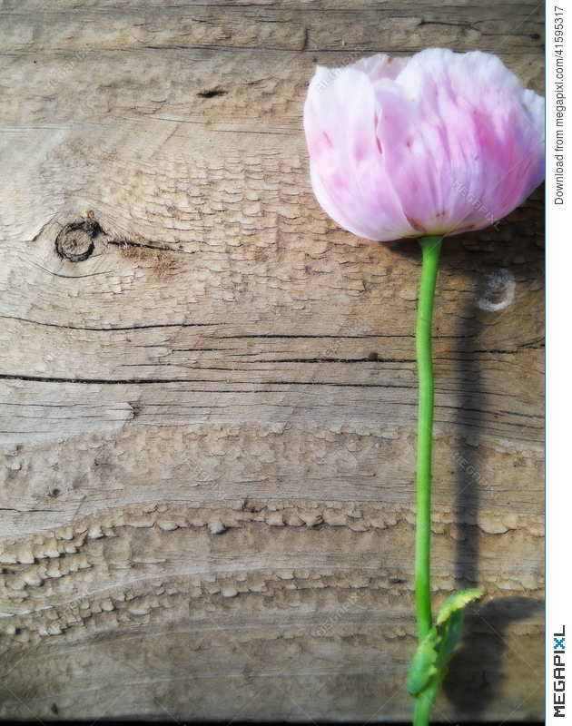 Portrait Texture Wood And Pink Flower Background