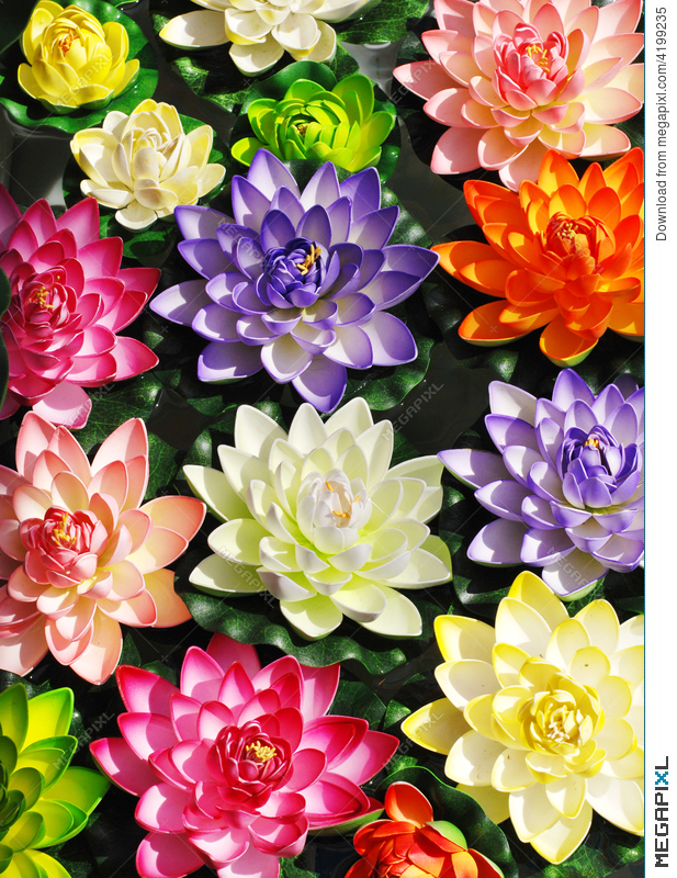Colorful lotus flowers stock photo 4199235 megapixl colorful lotus flowers mightylinksfo