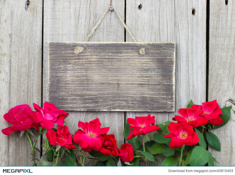 Flowers Bordering Blank Rustic Wooden Sign Hanging On Fence