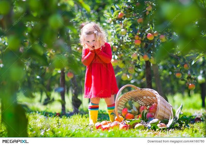 Little Girl In An Apple Garden Stock Photo 44160780 - Megapixl