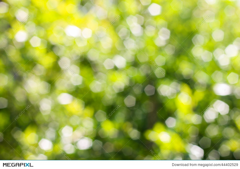 Green Abstract Bokeh Green Background Blurred Tree Stock Photo