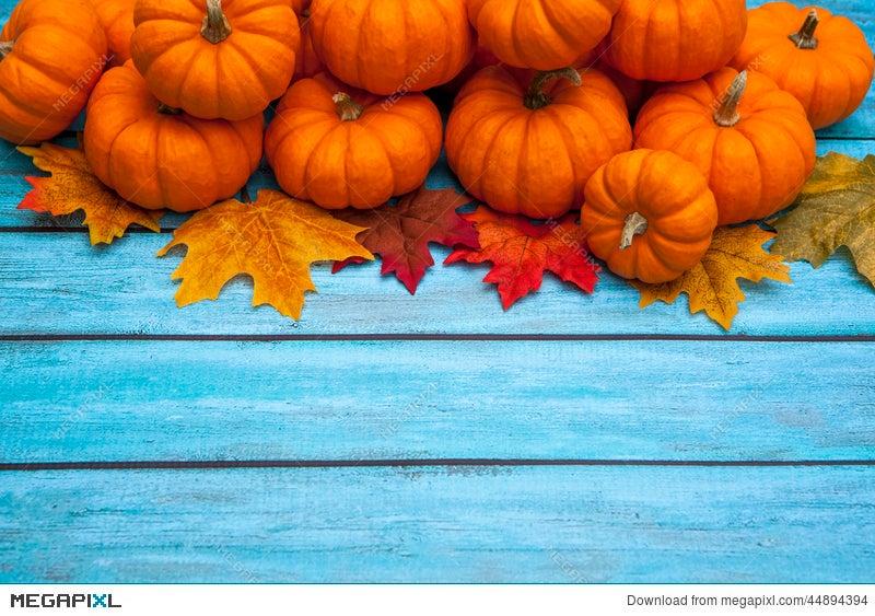 autumn pumpkin thanksgiving background stock photo 44894394 megapixl