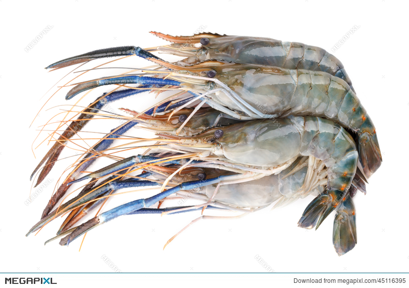 Giant Freshwater Prawn, Fresh Shrimp Isolate On White