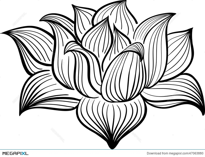 Vector Black And White Lotus Flower Illustration 47063880 - Megapixl