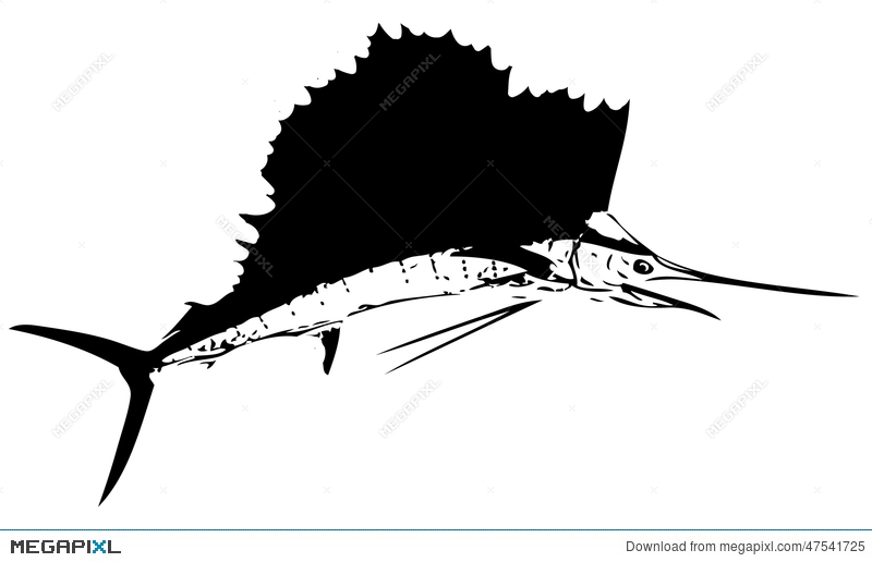 Atlantic Sailfish Fish Ii  Vector Illustration 47541725 - Megapixl