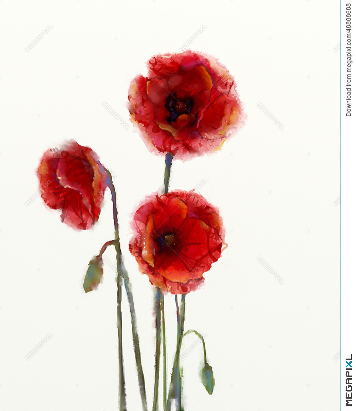 Red poppy flowers watercolor painting illustration 48888688 megapixl red poppy flowers watercolor painting mightylinksfo