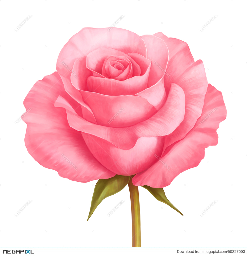 Vector rose pink flower illustration isolated on white illustration vector rose pink flower illustration isolated on white voltagebd Gallery