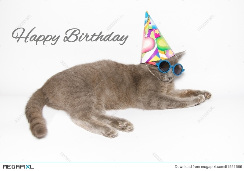 Happy birthday card with funny cat stock photo 51881666 megapixl happy birthday card with funny cat bookmarktalkfo Choice Image