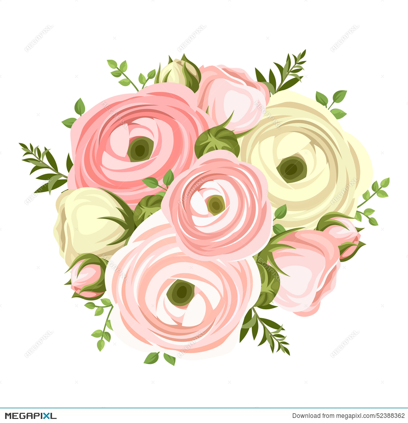 Bouquet of pink and white ranunculus flowers vector illustration bouquet of pink and white ranunculus flowers vector illustration mightylinksfo