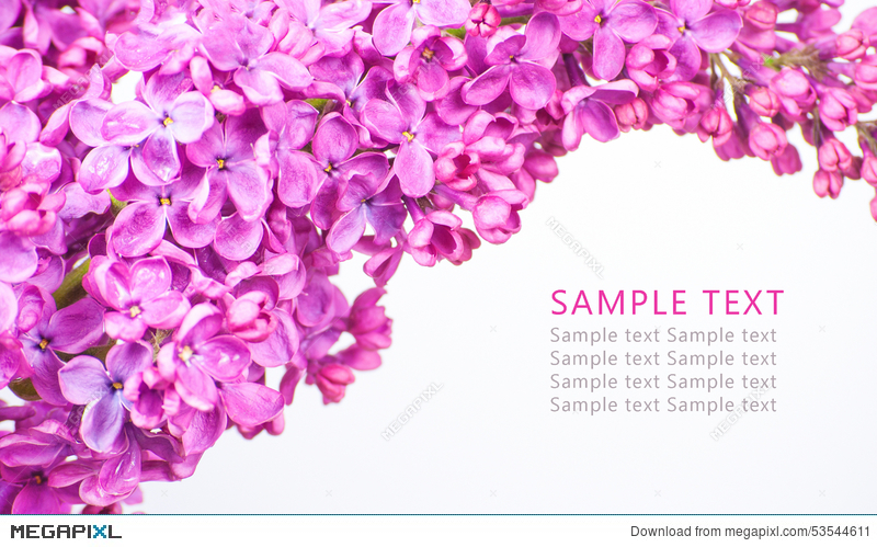 Purple flowers on white background with sample text stock photo purple flowers on white background with sample text mightylinksfo