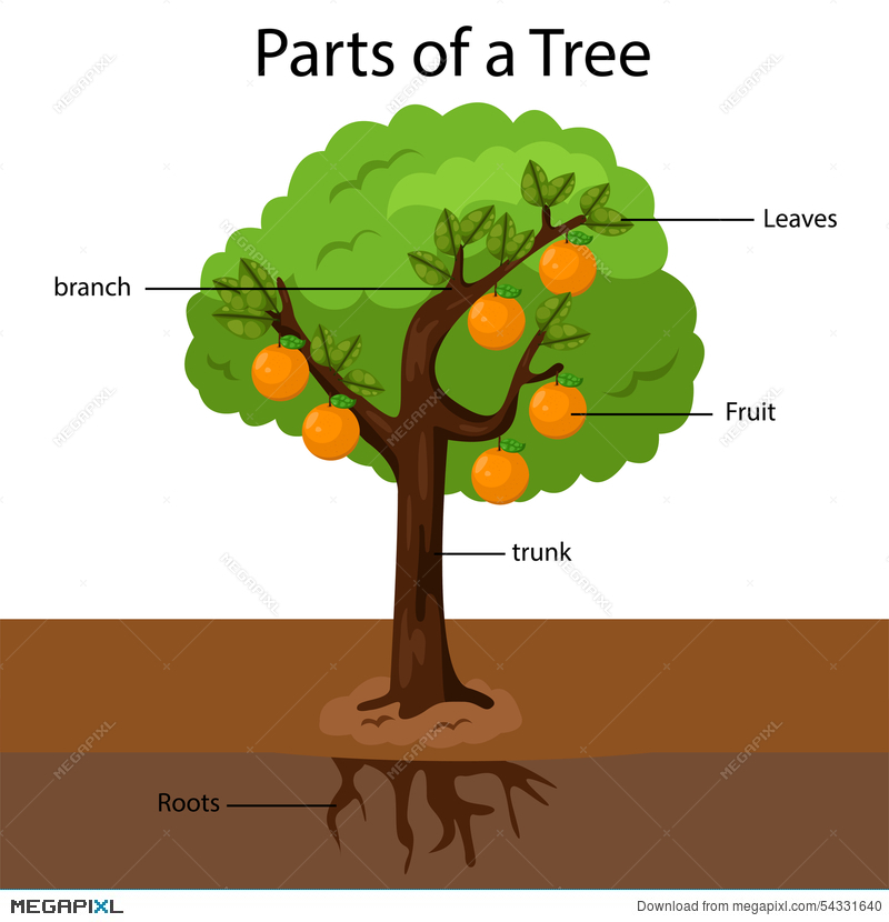 illustrator parts of a tree