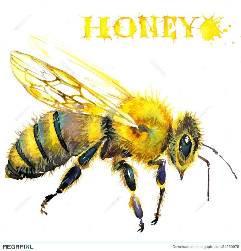 Honey Honeycomb Sweet Bee Watercolor