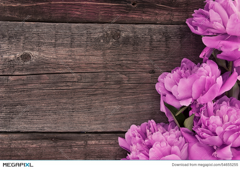Pink Peony Flower On Dark Rustic Wooden Background With Copy Spa