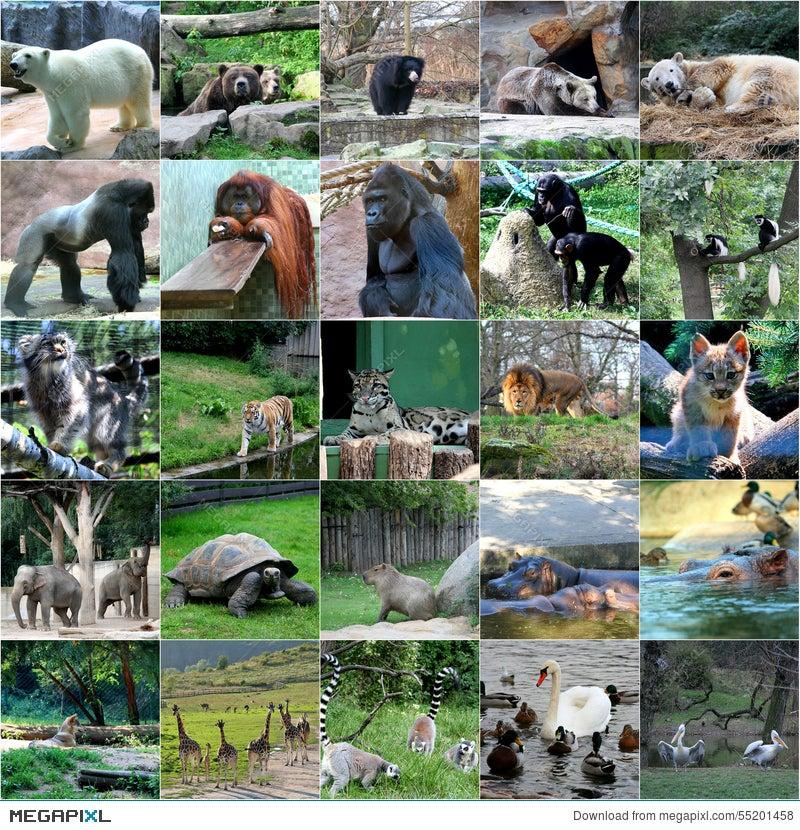 Collage Of Some Wild Animals