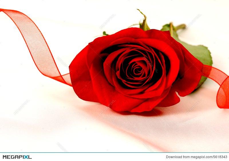 Red Ribbon Rose Stock Photo 5618343 Megapixl