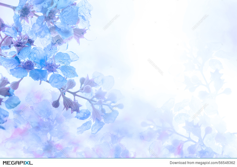 Abstract Soft Sweet Blue Purple Flower Background From Plumeria