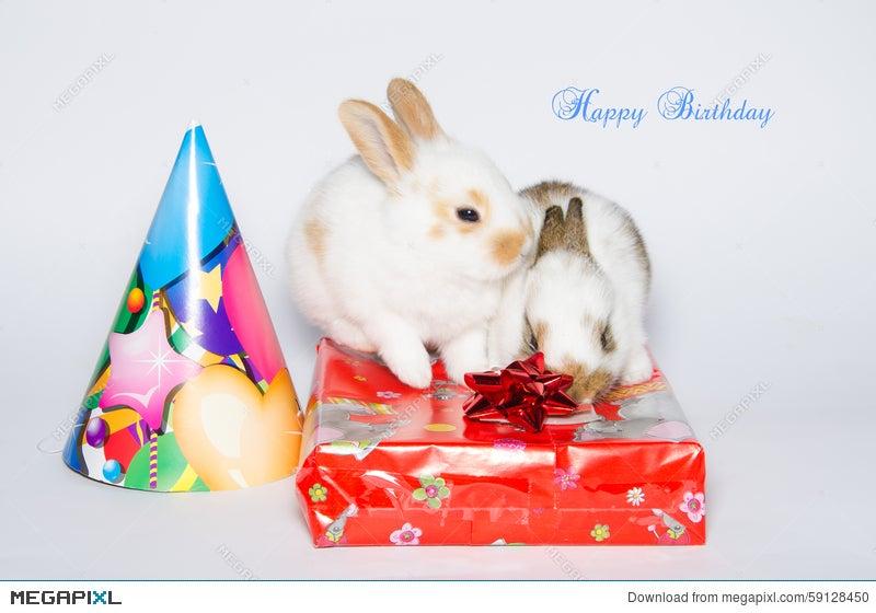 Funny Happy Birthday Card With Rabbits