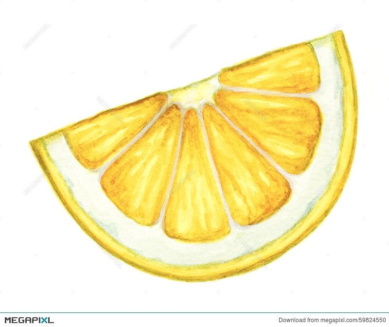 watercolor lemon slice on white background illustration 59824550