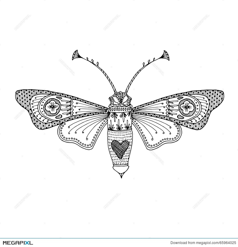 Butterfly Moth Black Hand Drawn Outline Delicate Adult Coloring Book Design To Relieve Stress