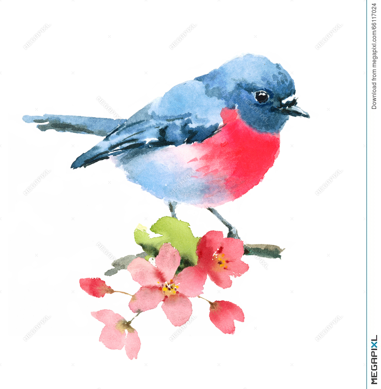 Pink Robin Bird On The Cherry Blossoms Branch Watercolor