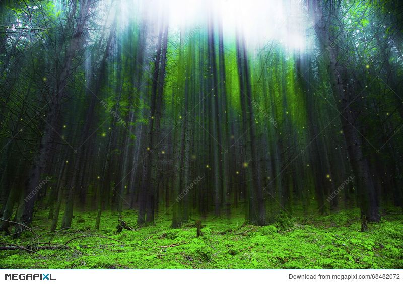 magic fantasy forest with lights and mist stock photo 68482072