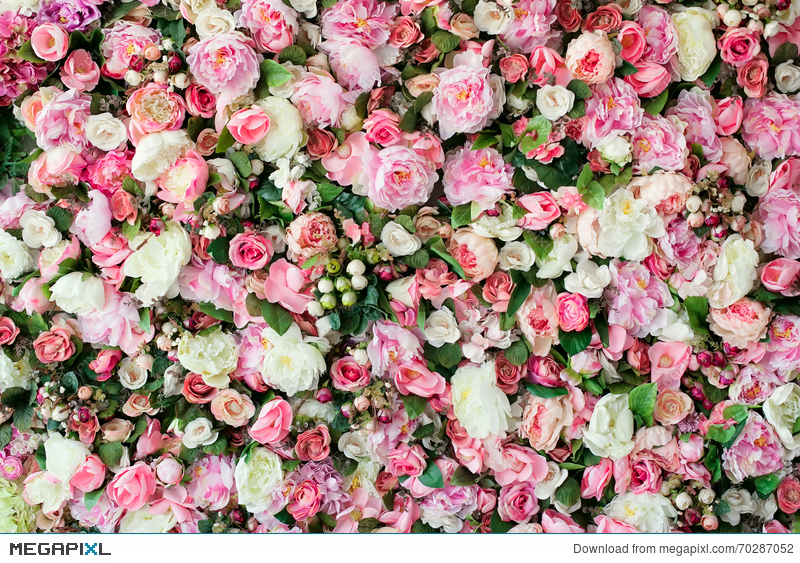 Closeup Image Of Beautiful Flowers Background With Pink And White Top View